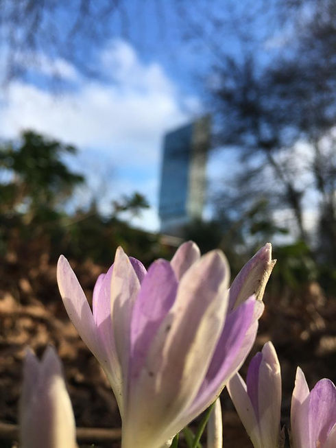Serpil_Lindsey spring.jpg