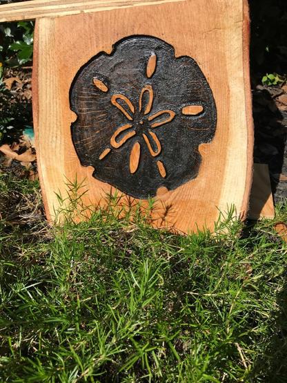 Sand Dollar Wood Stump