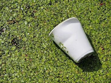 Polímeros Biodegradáveis: Solução definitiva?