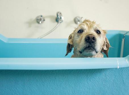 Splish, Splash, I was taking a (Hydro)Bath! 💦