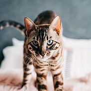 DANIBARTLETTPHOTOGRAPHY-Veils&Tails-63.jpg