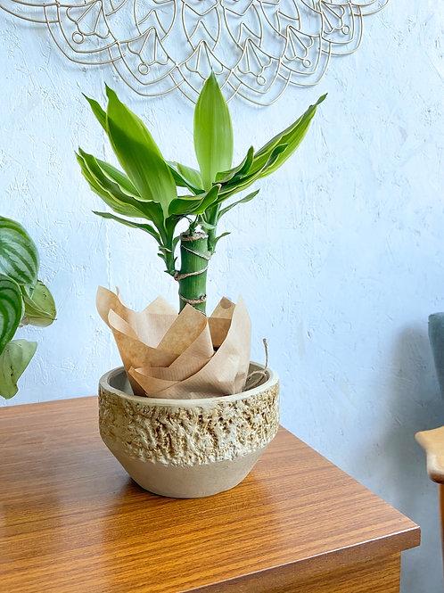 Vintage Vitry Ware Plant Pot