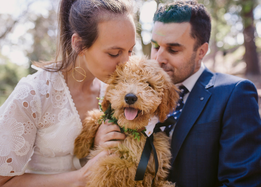 Bride and Groom Kissing Groodle Puppy in Flower Crown