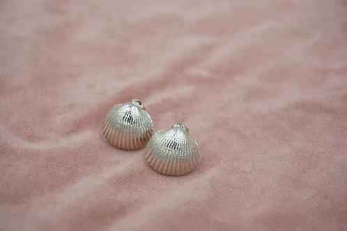 Baby Shell Earrings