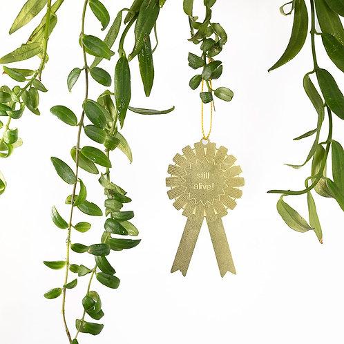 Plant Award 'Still Alive'