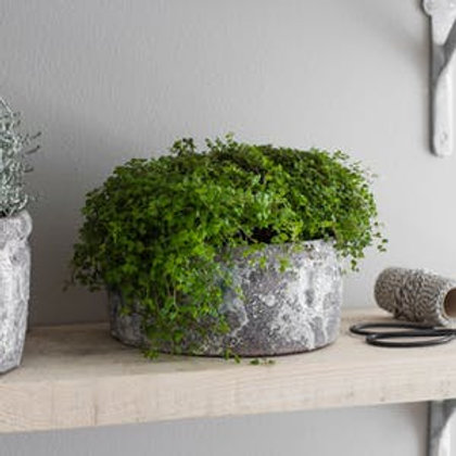 Ceramic Withington Bowl Planter