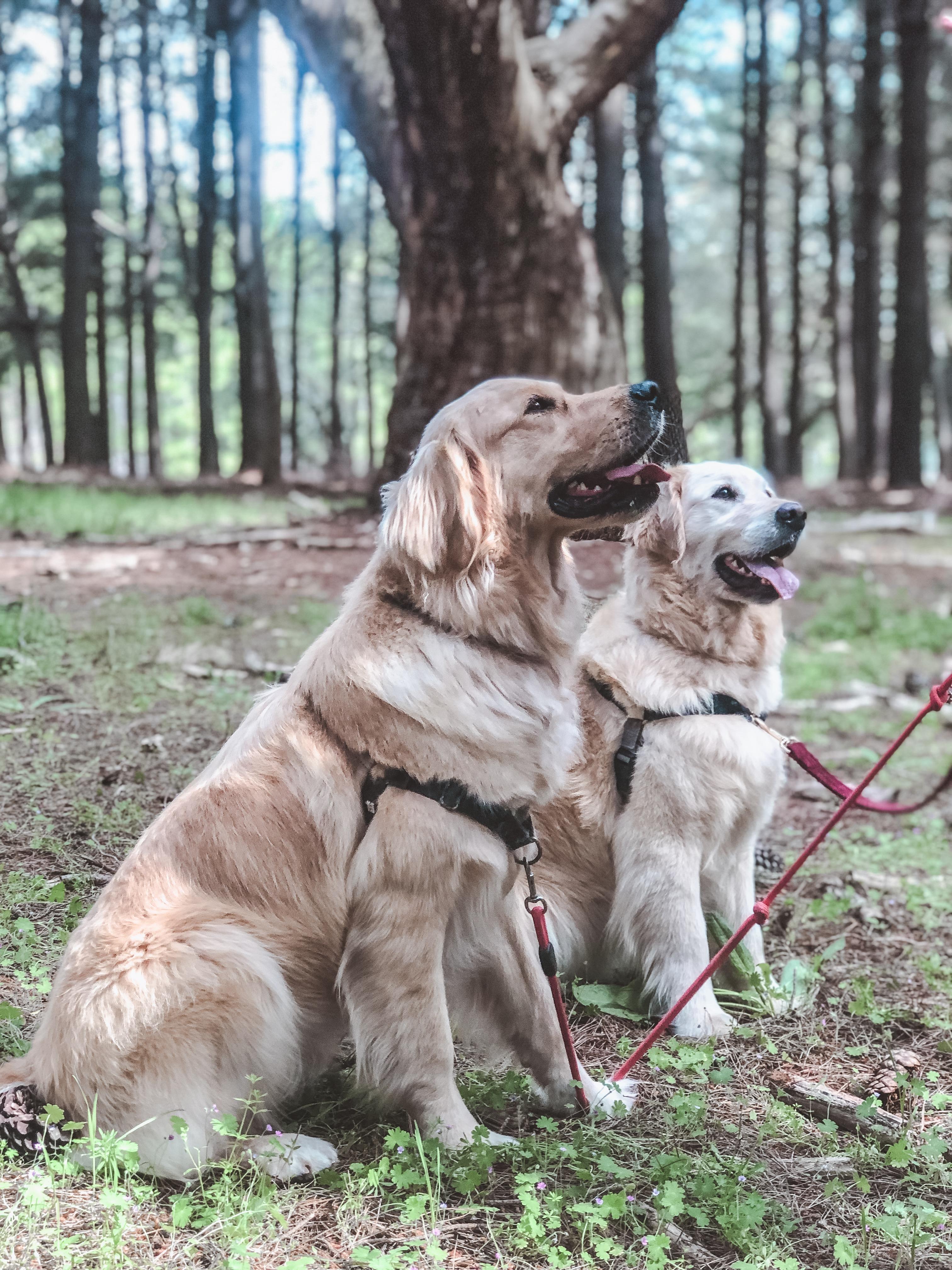 Tiahna & Trent - Floyd & Daisy