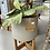 Thumbnail: Cement Planter with Stand