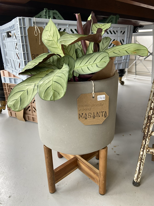 Cement Planter with Stand