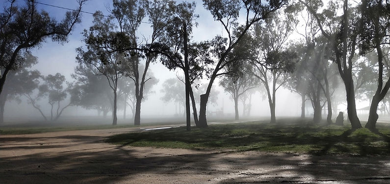 misty park.jpg