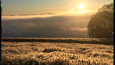 sunset grasses.jpg