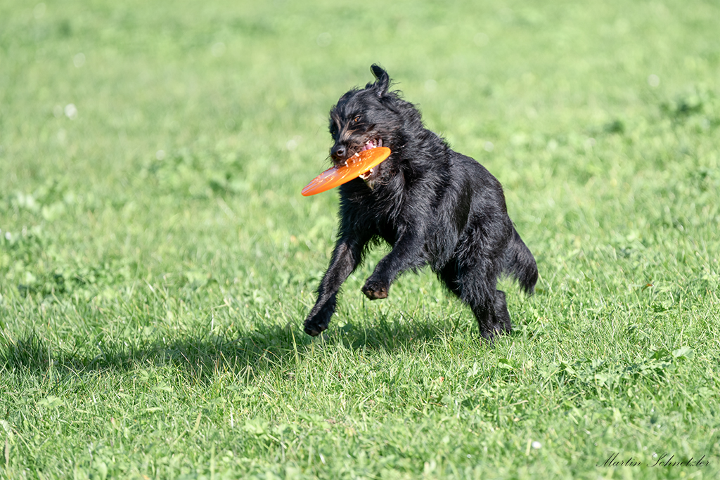 Fresbee so cool!
