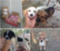 Tierschutz,Tier, Hund