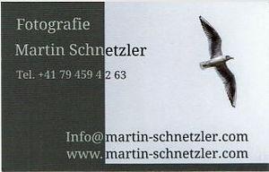 Martin Schnetzler