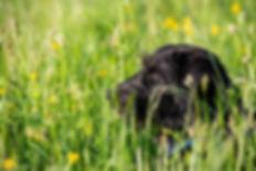Lisa im Blütenzauber