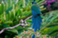 Aves y Naturaleza