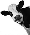 Bovine, Colostrum, Organic, Natural, Nutraceuticals, Supplements, Anti-Aging