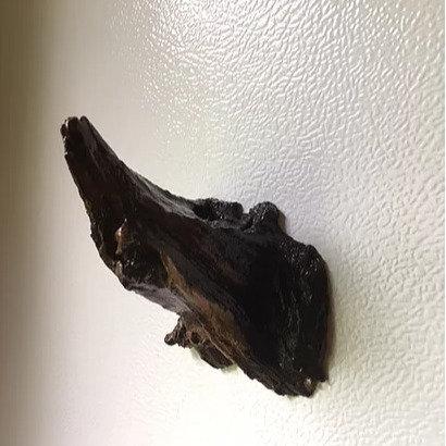 Locust Refrigerator Magnet