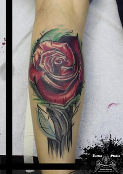 """colour tattoo """"rose"""""""