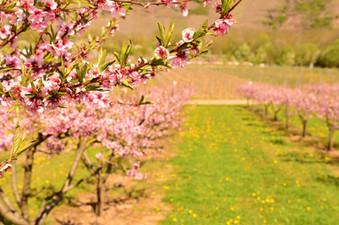 Frühlings-bäume