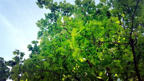 Frühlingsbaum, so richtig grün.