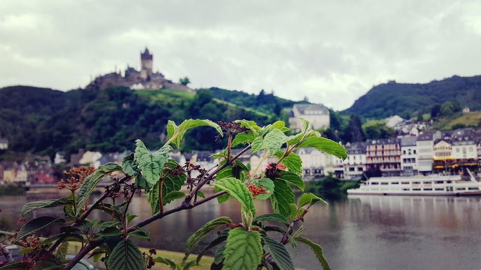 "Burg-Blick aus dem ""Garten"""