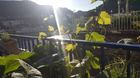 Sonnenverwöhnter Wein