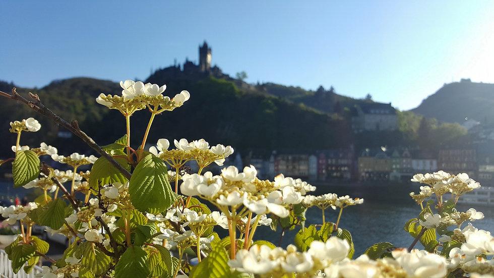 Burg hinterm Schneeball im Mai 2017 by T