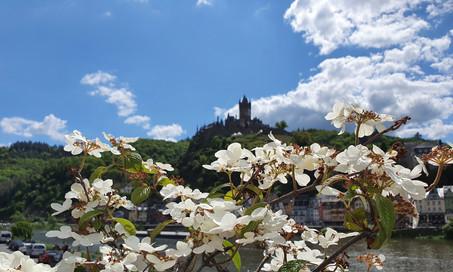 Die Burg durch die Blume gesehen