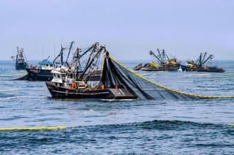 Pesca: suspenden extracción de anchoveta entre Chimbote y Huarmey