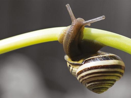Co daje wyciąg ze Śluzu Ślimaka Aspersa Müller'a dla Twoich włosów