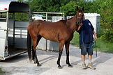 horse dixie5.jpg