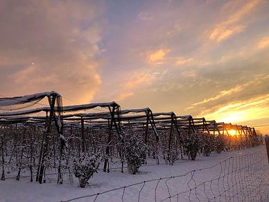 Obstanlage_Winter.jpg