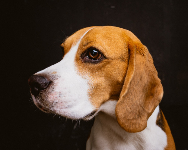 hund-hundefotograf-hundefotografering-fo
