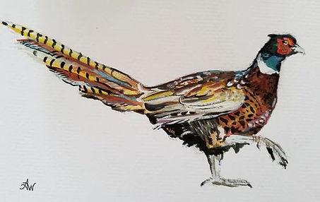 pheas watercolor.JPG