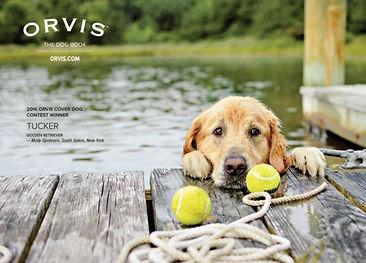 orvis ad.jpg