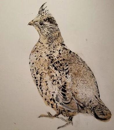 ruffed grouse sketch.JPG