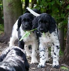 munster puppy.jpg