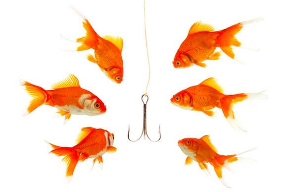 fishwherethefishare