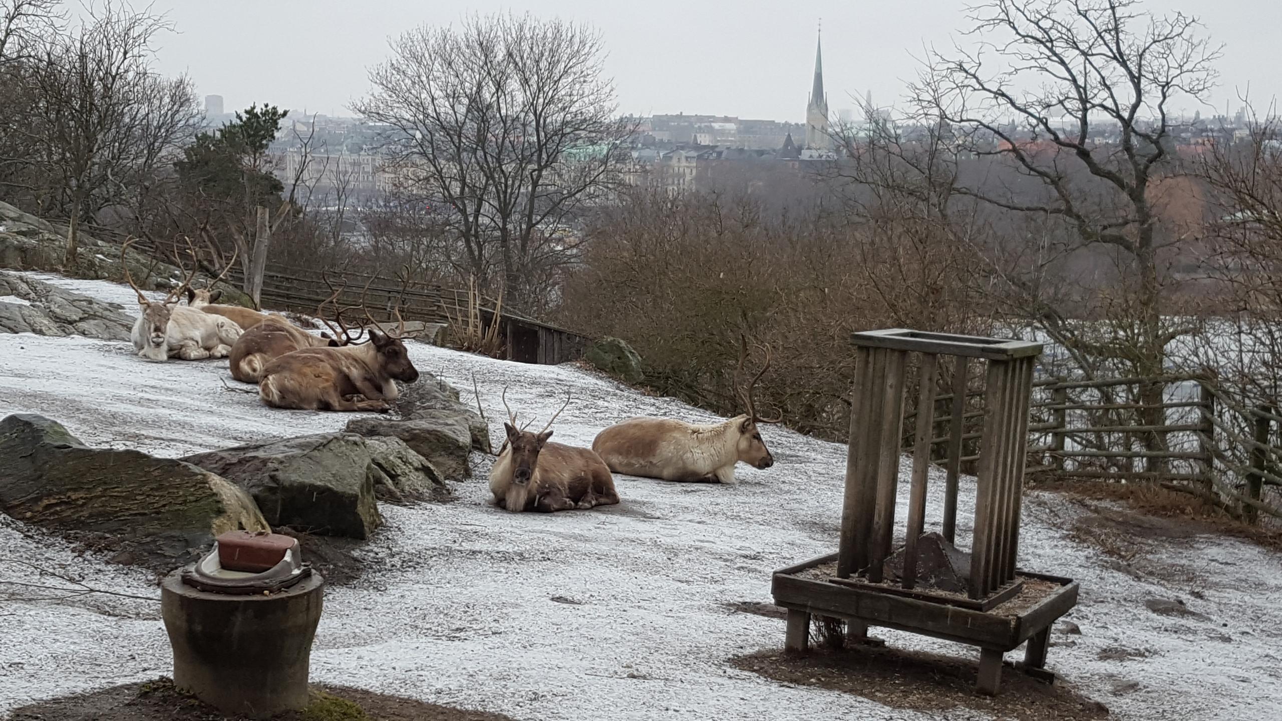 Skansen Museum and Zoo