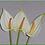 """Thumbnail: Box = 24 Anthurium Mini 14"""""""