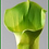 """Thumbnail: Box = 6 Calla Lily Large 28"""""""