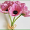 Thumbnail: Box = 6 Anemone Bouquet