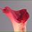 """Thumbnail: Box = 12 Calla Lily Med 27"""""""
