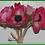 "Thumbnail: Box = 6 Anemone Bouquet 12"""