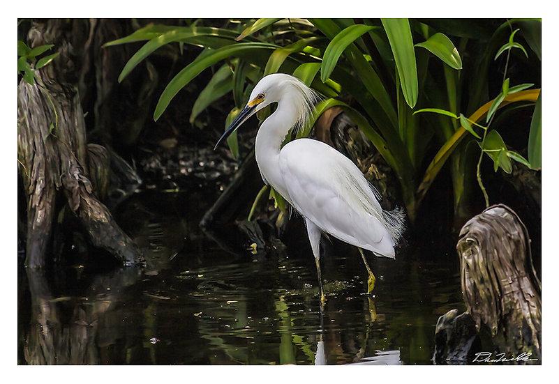 Egret in lagoon