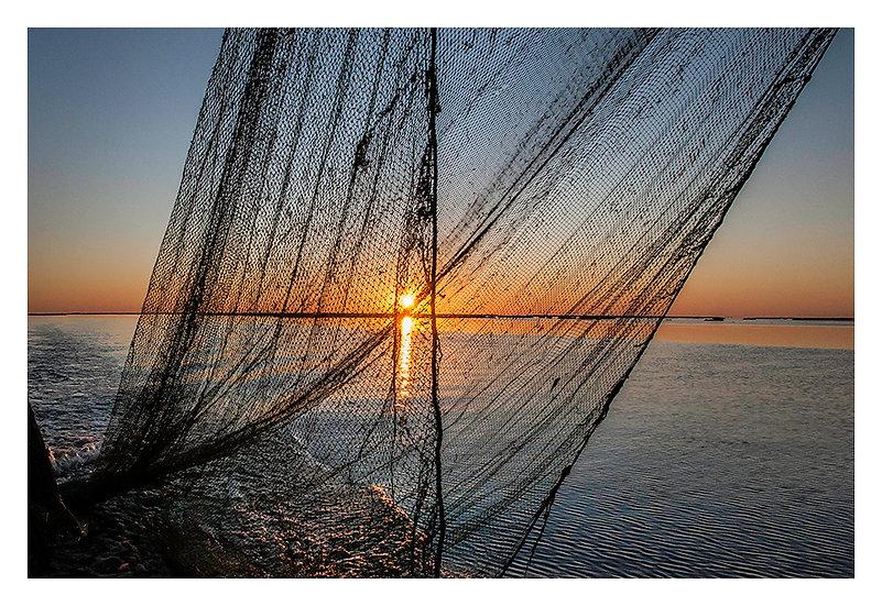 Shrimp Net Sunrise