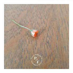 04-PHOTO-ANAGALIS-LA-fleur.jpg