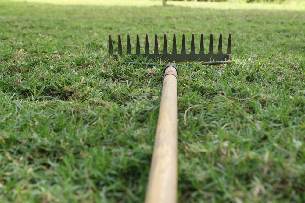 thatch lawn cedarwood cooperative