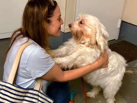 I Am a Therapist and I Have An Emotional Support Animal